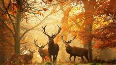 Раскраски по номерам олени в лесу