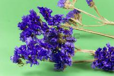 plant flower bloom blossom flora dry flowers purple green background Stock Photo