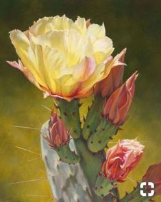 Prickly Pear Luminescence IV by Lauren Knode Giclee Print ~ 40 x 32 Cactus Drawing, Cactus Painting, Watercolor Cactus, Cactus Art, Cactus Decor, Cactus Flower, Flower Art, Art Floral, Watercolor Projects