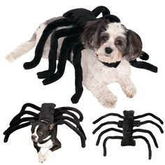 """Spider-Dog, Spider-Dog...does whatever a Spider-Dog does..."" Colin called Ulla a spider-dog because of her long legs and the flailing way she attacked and ""punched"" him with excited greetings."