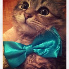 I look so cute 😊 #ilovetopose #siberiancat #catsofinstagram #victorthecat #iamcute #cats #instacat #catoftheday #catstagram #lovecats #catlovers #iamgorgeous #kitten #gorgeouscat #cutecat #ilovecats