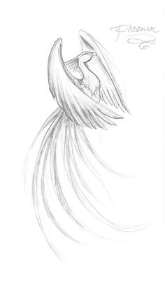 by on deviantART Im looking for something strong, but del. - Phoenix by on deviantART Im looking for something strong, but delicate all at once. -Phoenix by on deviantART Im looking for something strong, but del. - Phoenix by on . Tattoo Dragon And Phoenix, Phoenix Drawing, Phoenix Bird Tattoos, Phoenix Tattoo Design, Rising Phoenix Tattoo, Simple Phoenix Tattoo, Tattoo Simple, Phoenix Tattoo Girl, Phoenix Tattoo Feminine