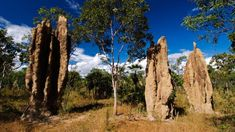 There is a new theory to explain why termites build such tall mounds – and it suggests architects could take inspiration from the tiny insects