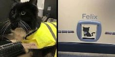 Hardworking cat Felix, who catches mice and keeps pests under control at the Huddersfield Railway Station in West Yorkshire, U.K., has received a major promotion to senior pest controller. As if that title doesn't sound more official than your own, check out her profesh uniform and name tag:Paid in t