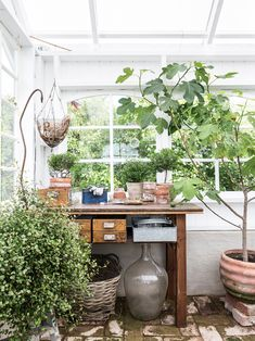 Växthusdrömmar (Made in Persbo) Greenhouse Gardening, Container Gardening, Greenhouse Ideas, Plant Design, Garden Design, Outdoor Rooms, Outdoor Living, Painting The Roses Red, Potting Sheds
