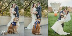Pilgrim Chapel/Webster House | dog | wedding | wedding photos | wedding photography | spring wedding | freelandphotography.com