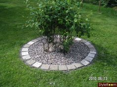 kantsten - Sök på Google Landscaping Around Trees, Home Landscaping, Landscaping With Rocks, Front Yard Landscaping, Front Garden Landscape, Garden Edging, Garden Pictures, Cool Landscapes, Garden Projects