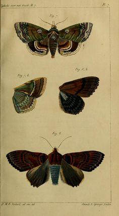 Vol 7 - Tijdschrift voor natuurlijke geschiedenis en physiologie. - Biodiversity Heritage Library