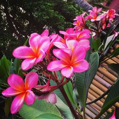 Lovely flowers on Lombok! #upsticksngo #travellingtheworld #travel #travelphotos #flowers #naturephoto #naturesbeauty #lombok #indonesia