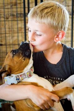 Why are Boxers great dogs? They are the perfect dog for kids.