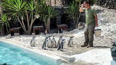 Guinate Tropisch Park en Pinguïnparadijs