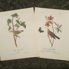 Two Vintage Bird Illustrations  Audubon Book by SimplySuzula