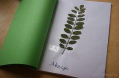 Zielnik dla dzieci- liście drzew