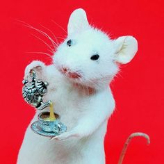 Fun Cup, Special Delivery, Pet Store, Taxidermy, Guinea Pigs, How To Take Photos, Squirrel, Dollhouse Miniatures, Creatures