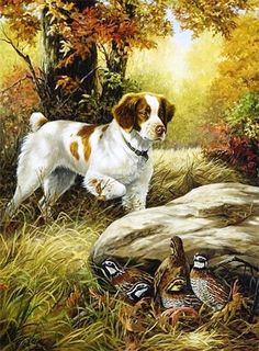 Both of my dogs are Britney Spaniels and they are both hunting dogs. I really en. Both of my dogs are Britney Spaniels and they are both hunting dogs. I really enjoy this picture because it shows th Wildlife Paintings, Wildlife Art, Animal Paintings, Animal Drawings, Tier Wallpaper, Animal Wallpaper, Hunting Art, Hunting Dogs, Rockwell Paintings