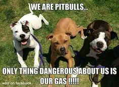 I'm just sad that everyone thinks EVERY pit bull is bad. It makes me feel sick that they don't give them a chance and just quickly run scared from them. Repost if agree.