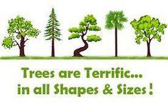 <3 trees...