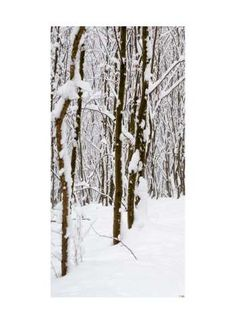 Wald im Winter Motivdruck Papier