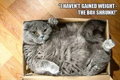 z-funny-animals-201 funny animal pictures pictures funny Animals