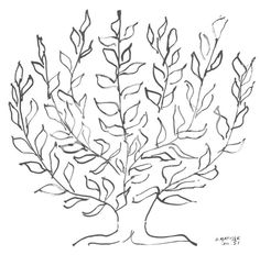 "drawing by Matisse called ""Le Platane"" from a whole series he did of trees."