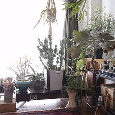DIY/ハンドメイド/多肉植物/アンティーク/雑貨/植物…などのインテリア実例 - 2016-03-09 14:09:35 | RoomClip(ルームクリップ)