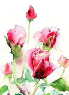 Watercolor rose painting   beautiful