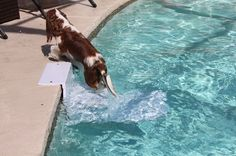 The PoolPup Steps are a convenient way for your swimming dog to get in and out of the water easily and an excellent safety device while you're away from the pool. Available at beachdoggies.com for $239.