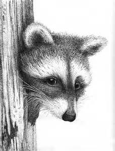 Racoon Drawing by Rens Ink - Racoon Fine Art Prints and Posters for ...
