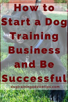 How to Start a Dog Training Business and Be Successful | Dog Obedience Training | Dog Training Commands | Dog Training Ideas | http://www.dogtrainingadvicetips.com/start-dog-training-business-successful #DogObedienceTipsandAdvice