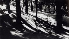 Trude Fleischmann: Türkenschanzpark, Wien, 1930er Jahre
