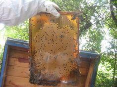 forum pszczelarskie z myśla o początkujacych