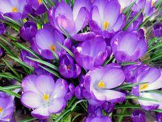Fondos De Flores Gratis En Hd Para Descargar 10