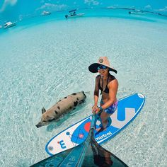 @GoPro Swimming pigs? That's how the wild animals of the #exumasbahamas welcome visitors @leesea78