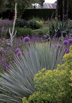 Australlian Dry Garden Textures