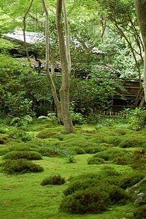Kyoto's Moss Garden