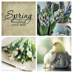 Good evening everyone, Looks like many of you were enjoying warmer temps  today. We were in the high 70s today, it was lovely. So how about tonight we do a little spring using this mood board and any of the colors within !!!!