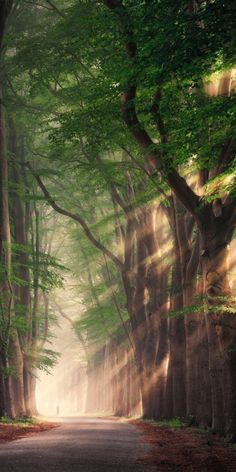 Rays of light Rob Visser Photography is part of Nature photography trees - Beautiful Landscape Wallpaper, Scenery Wallpaper, Beautiful Landscapes, Trees Beautiful, Beautiful Images Of Nature, Beautiful Nature Photography, Wallpaper Backgrounds, Fairy Wallpaper, Forest Wallpaper