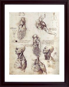 Leonardo De Vinci Anatomy