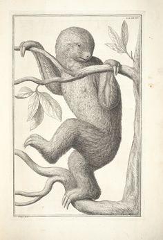 t.1 - Locupletissimi rerum naturalium thesauri accurata descriptio, et iconibus artificiosissimis expressio, per universam physices historiam : - Biodiversity Heritage Library