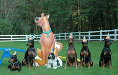 Party Dobes- this would be such a cute pic for Z's next birthday