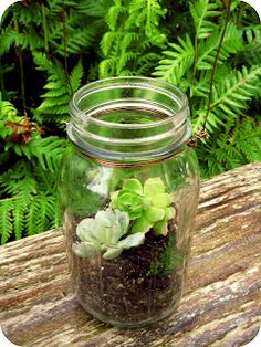 DIY Mason Jar Terrarium with succulents! Good link to how-to instructions and further mason jar terrarium ideas.