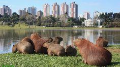 """#Curitba324anos #vemcuritiba #vivacuritiba Olá pessoal!! Hoje o post é dedicado a minha cidade do coração. Cidade que amo há exatamente 20 anos. Curitiba!!Mais conhecida como a """"Capital Ecológica do Brasil"""". Curitiba é uma cida…"""