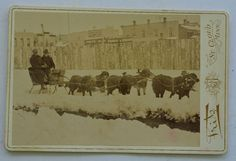 Antique Cabinet Photograph Newfoundland Dogs Pulling Sled | eBay