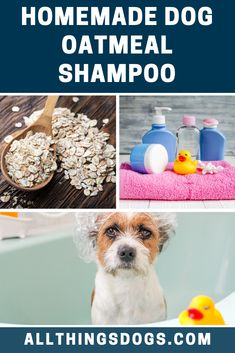 A perfect dog shampoo for those dogs who have sensitive skin; our homemade dog oatmeal shampoo is a natural cleanser, buffer and moisturizer. It also soothes and acts as an anti-inflammatory. Check out the full recipe here. Homemade Dog Shampoo, Cleanser, Moisturizer, Oatmeal Shampoo, Dog Pants, Organic Shampoo, Terrier Breeds, Pet Store, Dog Grooming