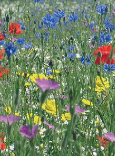 Buy wildflower seed mixes online from Landlife Wildflowers, the wildflower experts. We supply pure wildflower mixtures and wildflower and grass meadow mixtures to help bees buitterflies and pollinators. Huge range available of UK native seed mixes. Wildflower Seeds, Garden Borders, Wild Flowers, Fields, Grass, Pure Products, Plants, Fingers, Inspiration