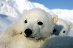 Arktisen merijään sulaminen vaatii pikaisia toimia
