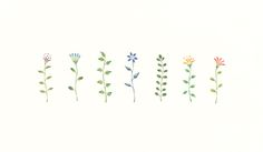 """Colorful Flowers"" −RiLi, picture book, illustration, design ___ ""色とりどりの花"" −リリ, 絵本, イラスト, デザイン ...... #illustration #colorful #flower #イラスト #色 #花"