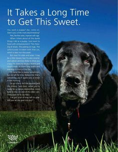 Good words... thing about adopting an older dog! You will never regret it.