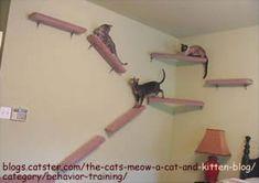 Como hacer gimnasio casero para gatos