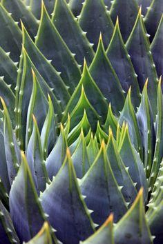 ~~Succulent by Jenny Ross~~
